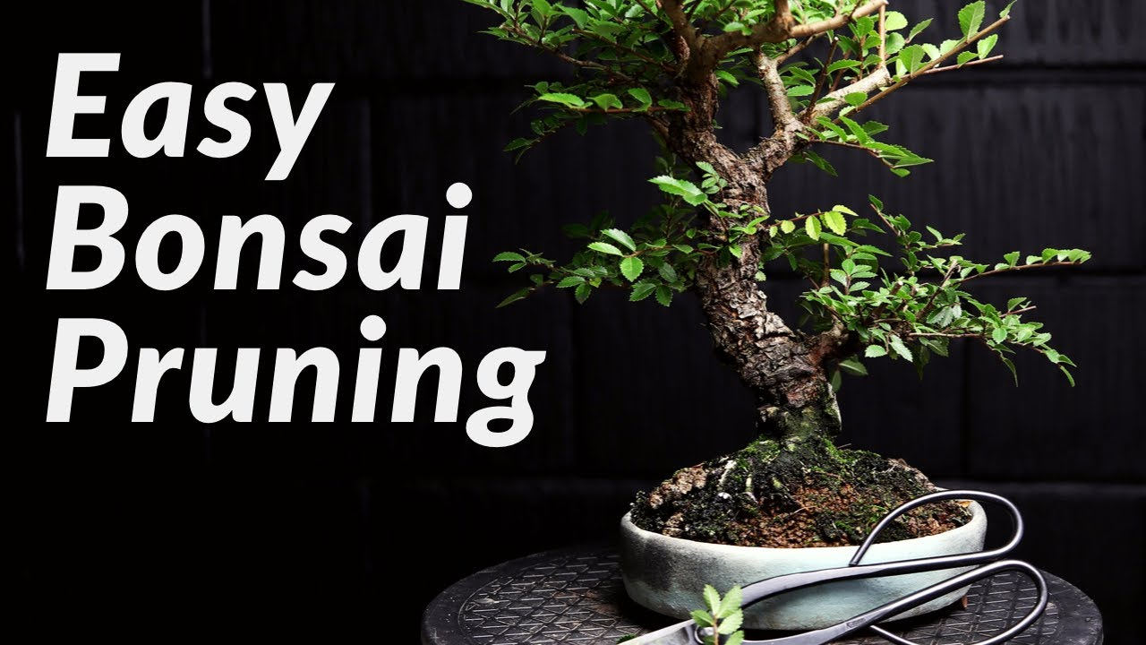 Spider Mite Pest Control On My Bonsai With Neem Oil Youtube