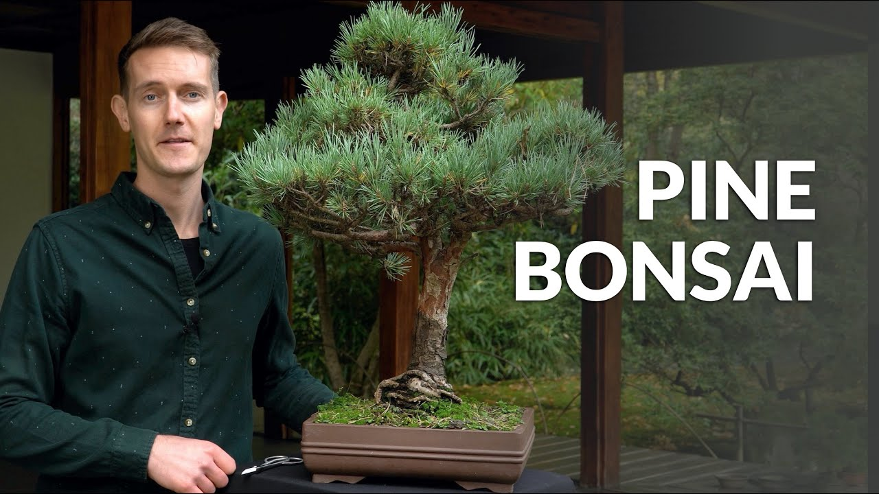 How To Shape A Gardenia Bonsai Youtube