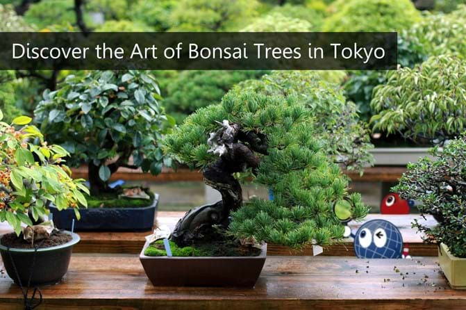 Tokyo Bonsai How To Become An Expert Expat In The Art Of Mini Trees Plaza Homes