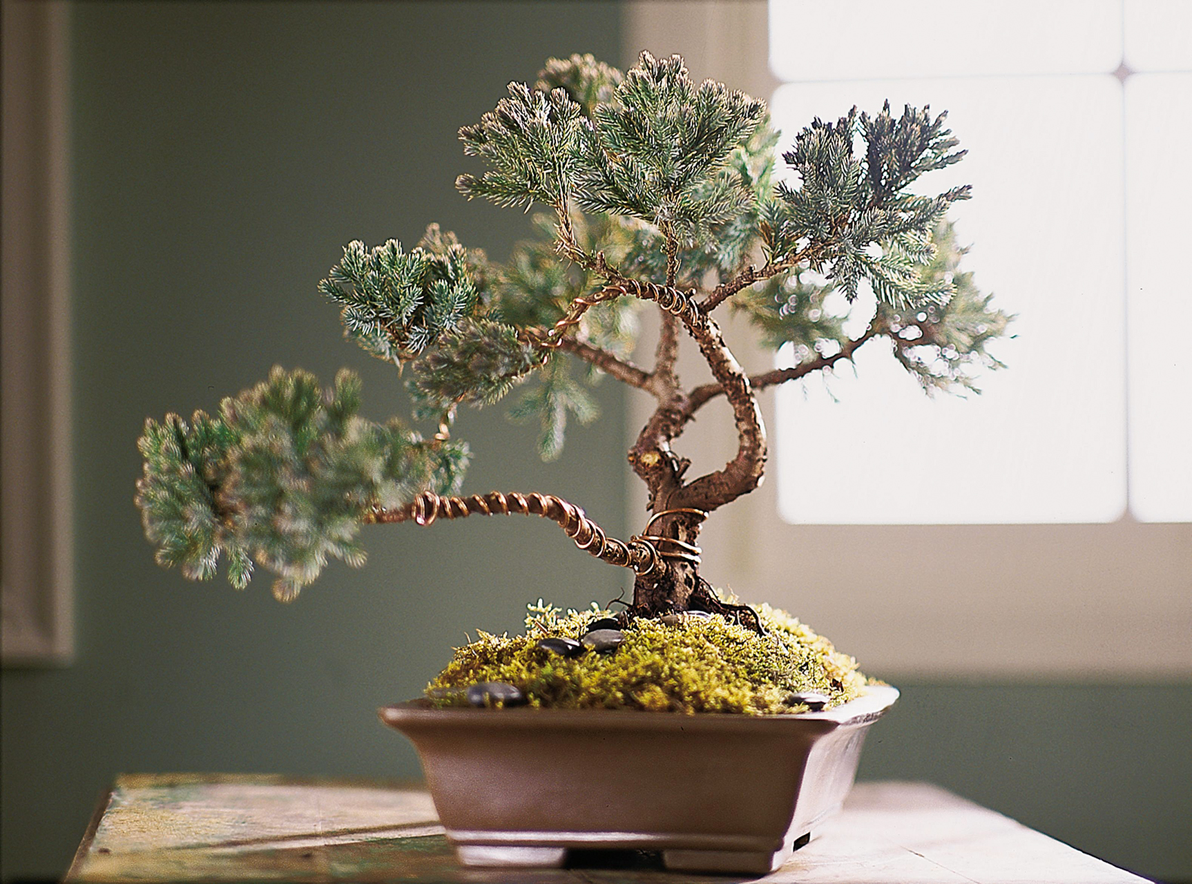 The Planter Rsquo S Choice Bonsai Starter Kit Is So Easy To Use Better Homes Gardens