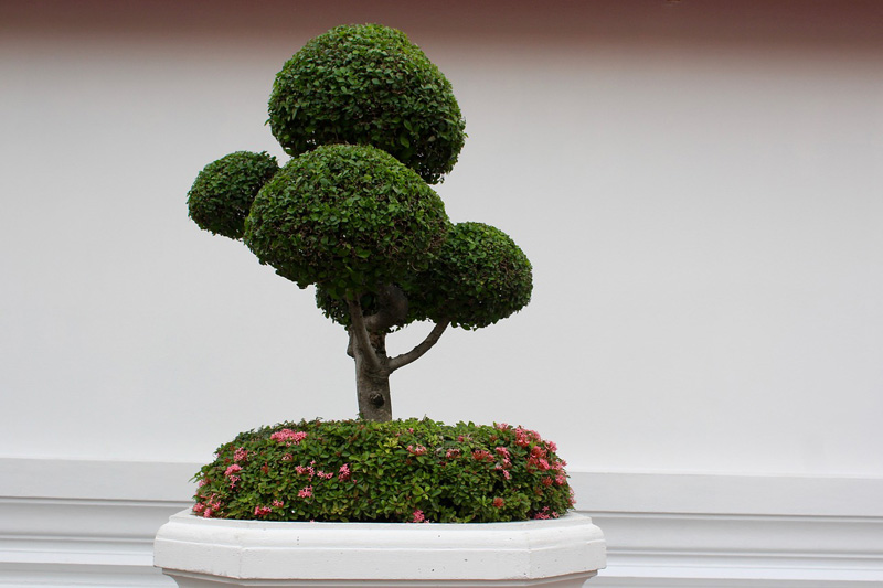 A Beginner S Guide To Bonsai Trees Arborist Now