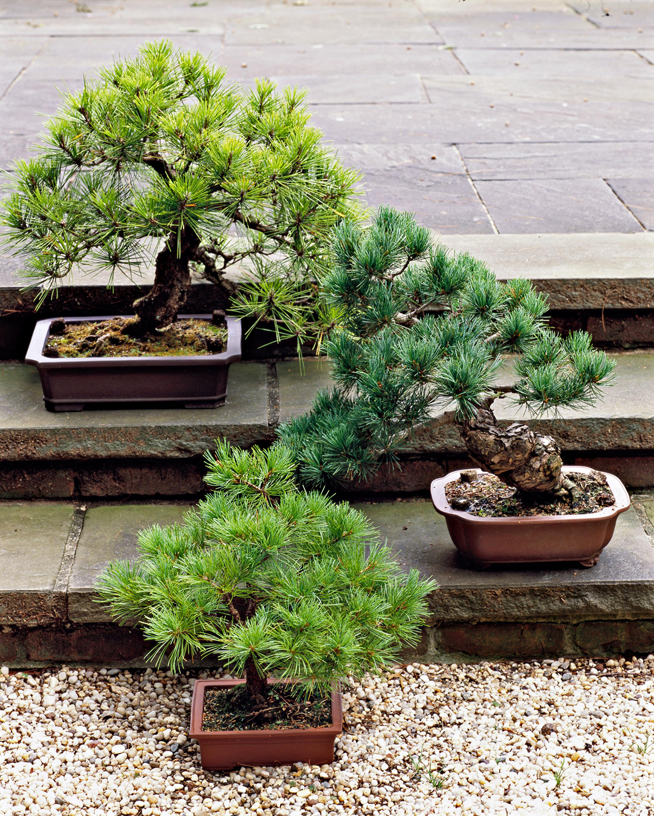 How To Plant A Bonsai Tree Better Homes Gardens
