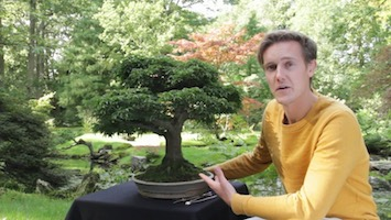 Where To Find Bonsai Trees For Sale Bonsai Empire