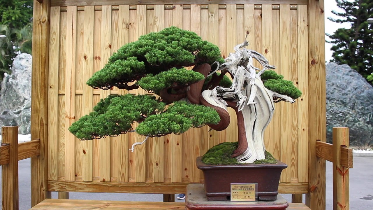 How To Grow Bonsai Trees From Seed Subtitles Available Youtube
