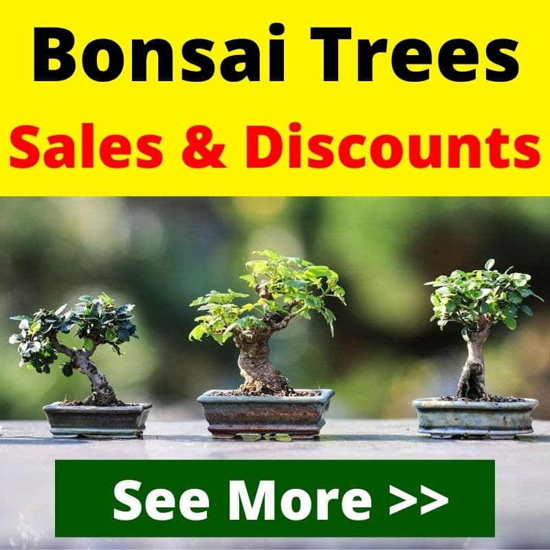 What Do Bonsai Trees Mean And Symbolize Learn Before Choosing Florgeous